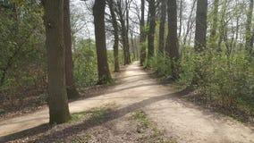 Natur-Wald auf seinem Besten lizenzfreie stockfotografie