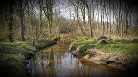 Natur-Wald mit kleinem Nebenfluss auf seinem Besten stockfotos