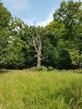 Natur Wald wood forest Natur. Natur Wald forrest royalty free stock images
