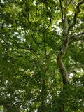 Natur Wald wood forest Natur. Natur Wald forrest royalty free stock photo