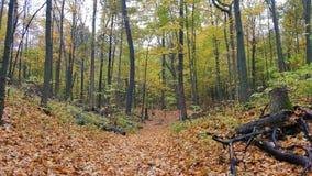 Natur-Wanderung Lizenzfreie Stockbilder