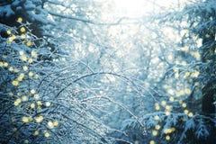 Natur-Weihnachtshintergrund Stockbild