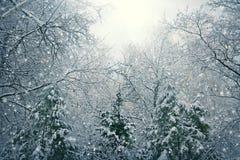 Natur-Weihnachtshintergrund mit Schnee Lizenzfreies Stockbild
