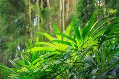Natur zieleni tła Fotografia Stock