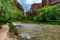 Natur in Zion National Park, Utah Lizenzfreies Stockbild