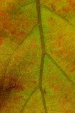 Natur-Zusammenfassung - Zellen und Adern eines sterbenden Blattes Lizenzfreie Stockfotos