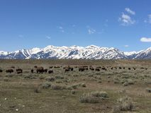 Natur zwierząt gór śniegu przyroda Zdjęcia Stock