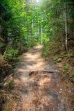Natura ślad w lesie obraz royalty free
