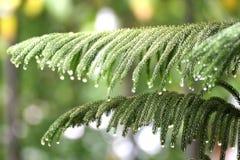 Natura świezi zieleni liście z kropli wody selekcyjną ostrością zdjęcia stock