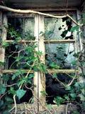 Natura żyje w zaniechanych miejscach zdjęcia stock