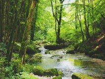 Natura obrazy royalty free