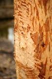 Natura 102 Immagine Stock Libera da Diritti