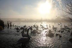 Natura 3 i przemysł zdjęcia royalty free