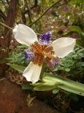 Natura Fotografia Royalty Free