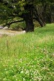 Natura Fotografie Stock