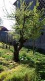 Natura Photos libres de droits