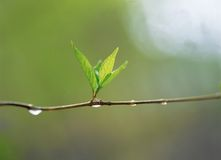 Natura Immagini Stock
