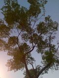 Natura zdjęcia stock