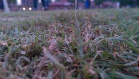 Natura zdjęcie stock