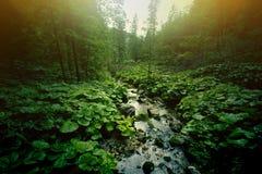 Natura Fotografia Stock