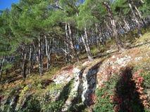 Natura Abkhazia E zdjęcia stock