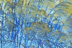 NATURA abstrakta pampasów trawy dmuchanie W wiatrze Zdjęcia Royalty Free