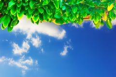 Natura al bello cielo blu Immagini Stock