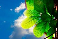 Natura al bello cielo blu Fotografie Stock Libere da Diritti
