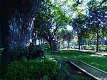 Natura al parco Fotografia Stock Libera da Diritti