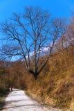 Natura, albero, strada, strada della montagna, la ragazza sul cavallo, bellezza Immagini Stock