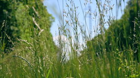 Natura all'industriale stock footage