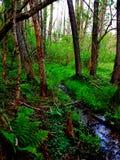 Natura alla sua depressione andante dell'insenatura più fine una foresta Fotografia Stock