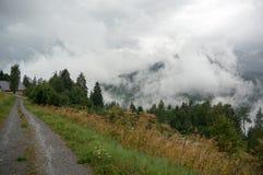 Natura alpina della foresta Fotografia Stock Libera da Diritti