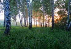 Natura Altaya Fotografie Stock