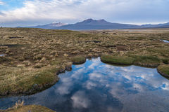 Natura Altiplano Fotografia Stock