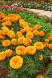 Natura arancio astratta Fotografia Stock Libera da Diritti