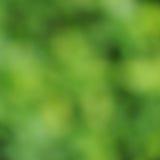 Natura astratta di verde del fondo Fotografia Stock Libera da Diritti