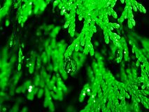 Natura astratta nel verde Immagine Stock Libera da Diritti