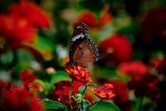 Natura baciata fotografie stock libere da diritti