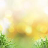 Natura background. Green grass natural background with selective focus Royalty Free Stock Images