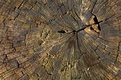 Natura Bagażnik stary drzewo jako tło tekstura Obrazy Stock