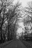 Natura in bianco e nero Fotografia Stock