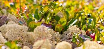 Natura biegunowy region w jesieni Fotografia Royalty Free