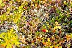 Natura biegunowy region w jesieni Zdjęcie Stock