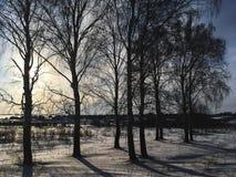 Natura, campi, foreste e cielo blu russi di inverno Immagine Stock Libera da Diritti