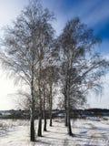 Natura, campi, foreste e cielo blu russi di inverno Fotografia Stock
