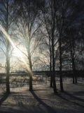 Natura, campi, foreste e cielo blu russi di inverno Fotografie Stock Libere da Diritti
