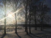 Natura, campi, foreste e cielo blu russi di inverno Immagine Stock