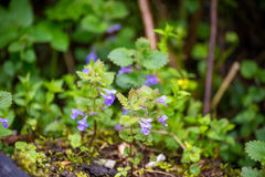 Natura Carpathians nella pioggia Vicino alla cascata Kamyanka Fotografia Stock