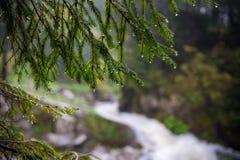 Natura Carpathians nella pioggia Vicino alla cascata Kamyanka Fotografie Stock Libere da Diritti